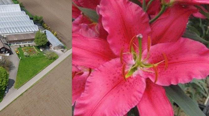 Blumen Vetterli